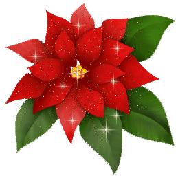 stella-di-Natale.png